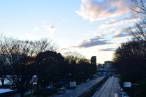 Sunset at Yoyogi Park
